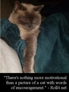 cat • Roll4 Network